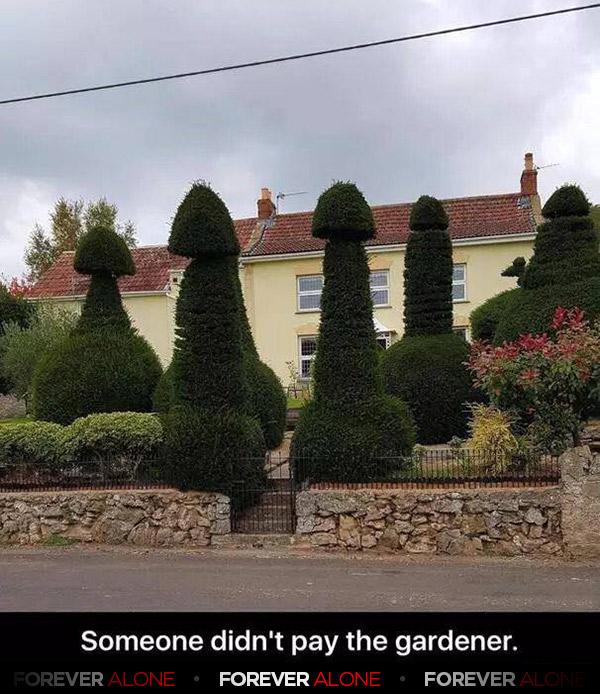 Hairy bushes