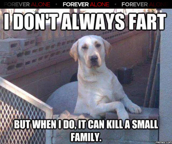 Smelly Dog Farts Forever Alone Forever Alone